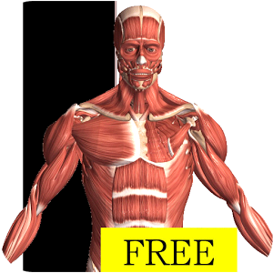 Visual Anatomy Free