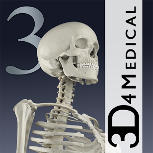 Essential Skeleton 3