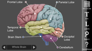 3D Brain screenshot