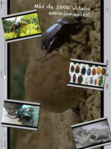 Insectos screenshot